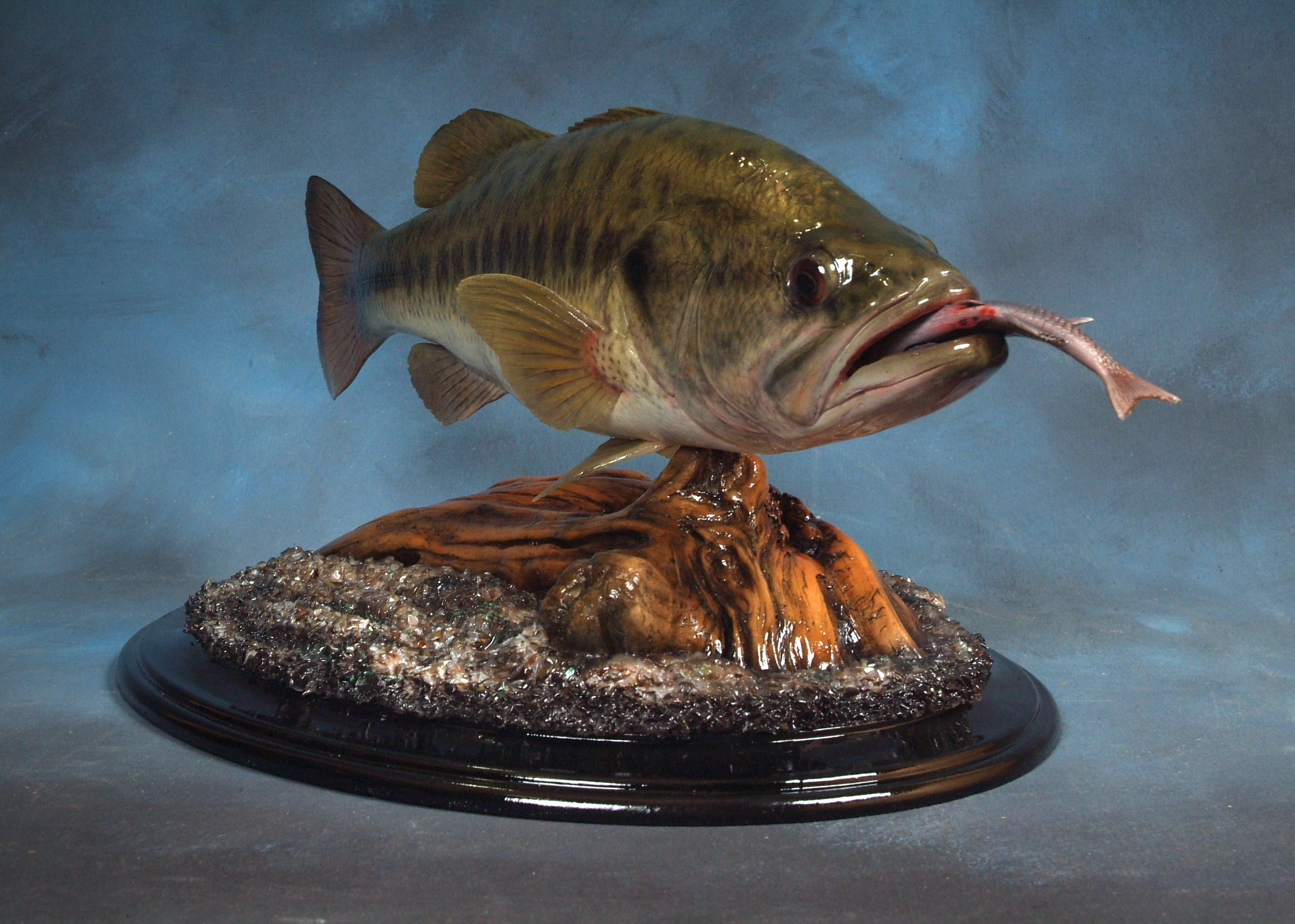 RB LargeMouth Bass OM 16.25 x 11 LB 2.5 (NTA 1st Place)