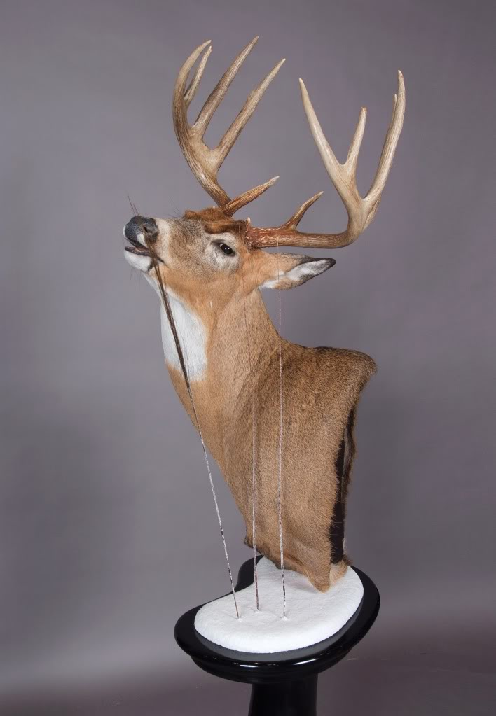Advanced Whitetail Aug 25-27