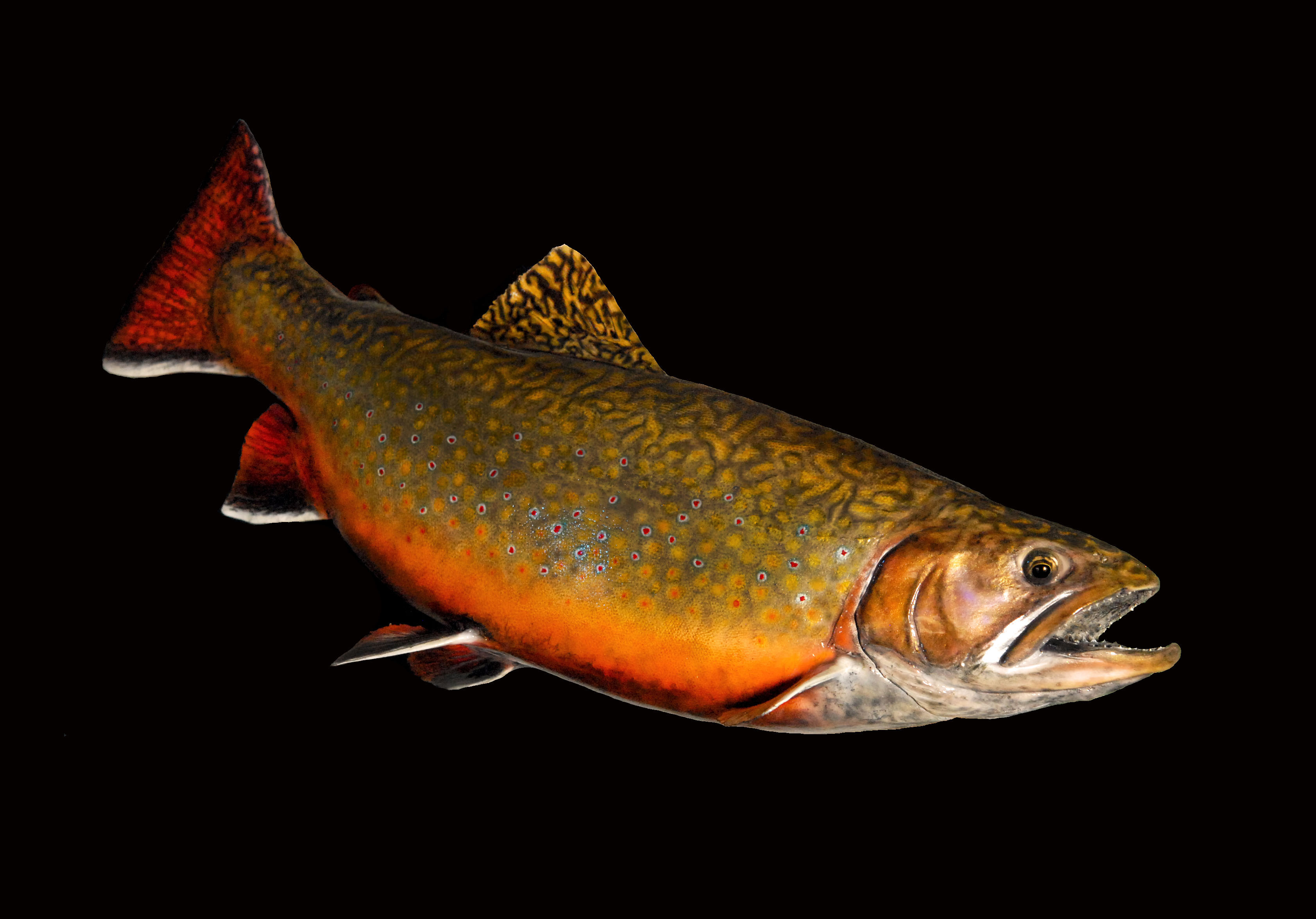 Brook Trout Reproduction