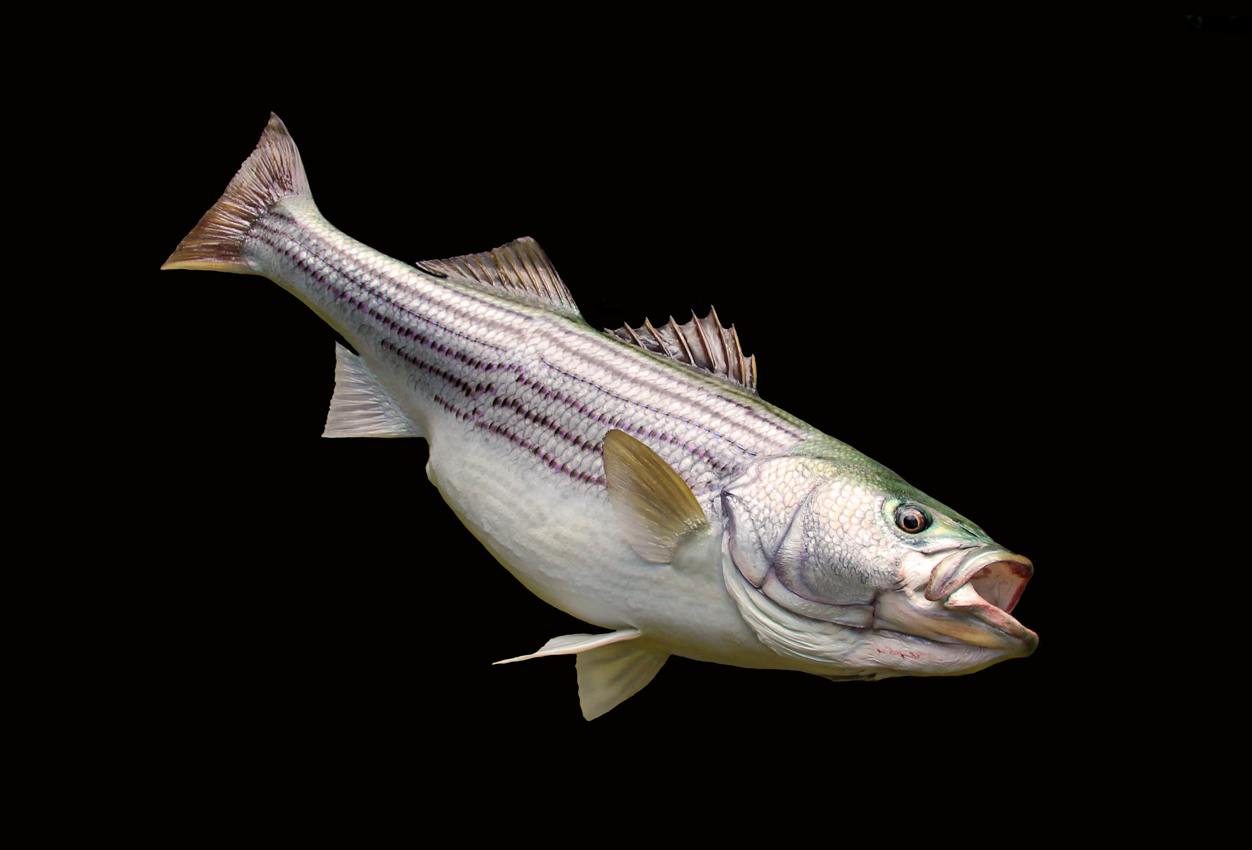 Lake Country Replicas : Anglers Artistry, The Art of